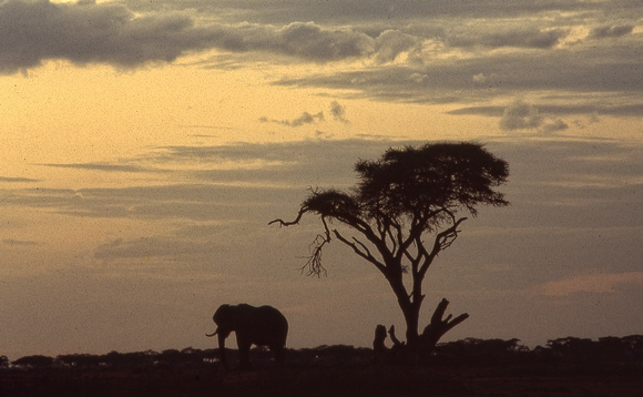 A1_ElephantSunset